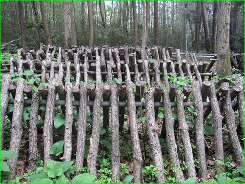 しいたけの原木