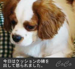 20100318fc2_1.jpg
