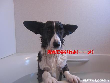 2010123108.jpg