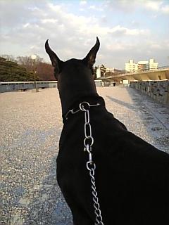 rope 046