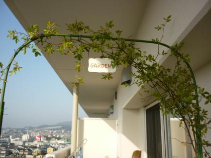 ベランダの花001