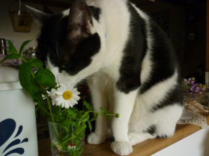 花と猫014