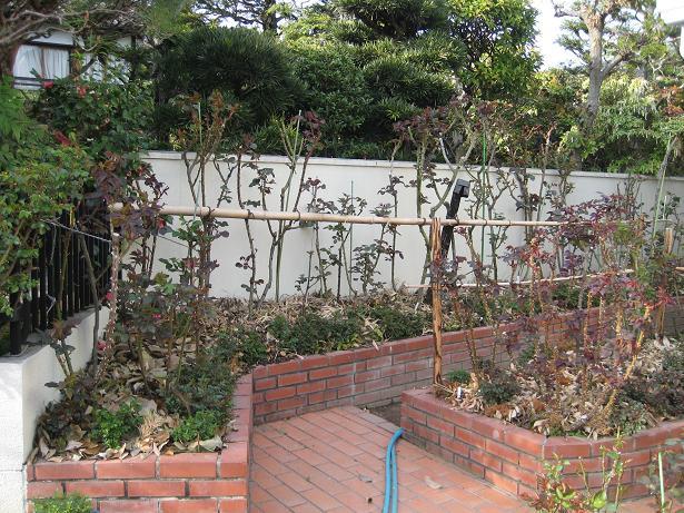 京都ラビアンローズ 花壇