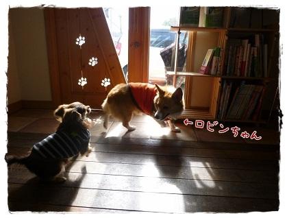 ツナ&ロビンちゃん