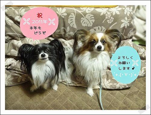 blogP1100830b.jpg