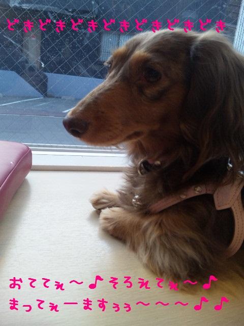 DVC00546 - コピー