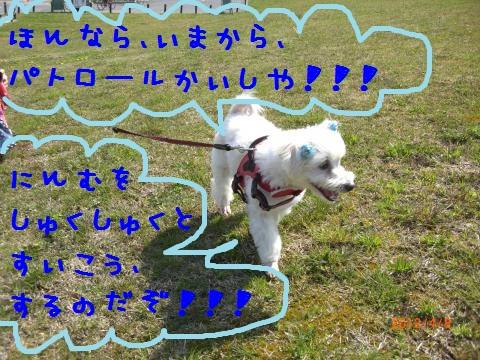 CIMG0726_convert_20120409122129.jpg