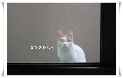 IMG_8931-.jpg