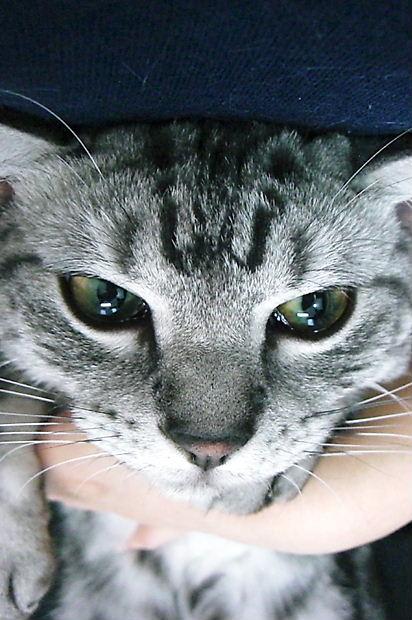 猫捕獲2010103