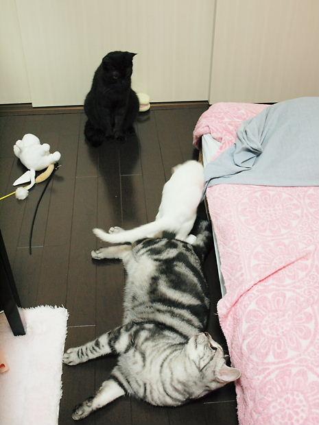 ウェンディ安眠妨害される2010109 (1)