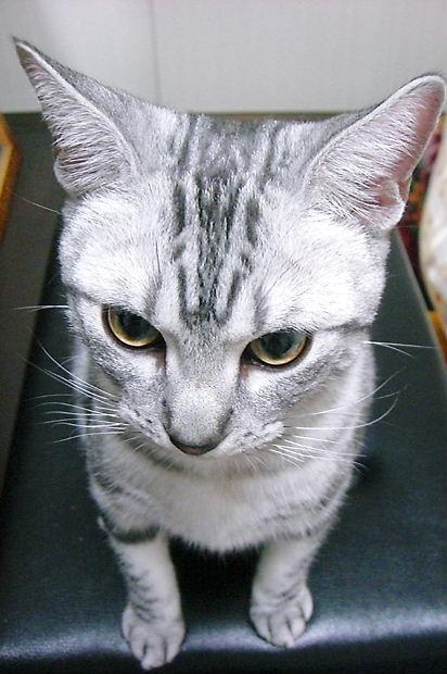 変態縞猫2010109