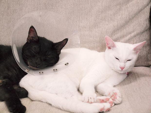 ルイの枕20101021 (1)