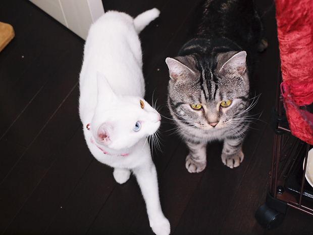 縞々と白猫20101106 (1)
