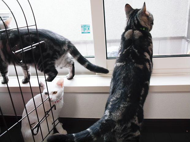 縞々と白猫20101106 (2)