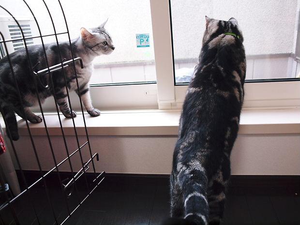 縞々と白猫20101106