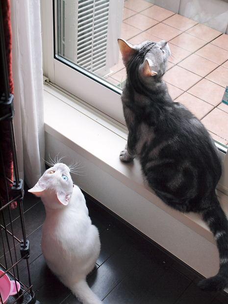 朝の窓辺のみんな20101111 (2)