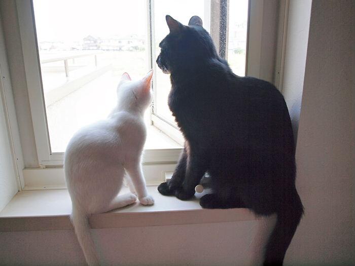 白黒親子の窓辺の会話20101124 (3)