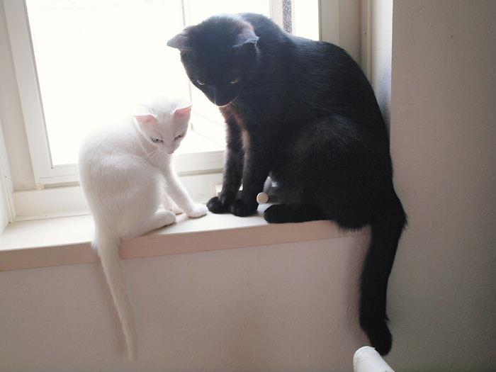 白黒親子の窓辺の会話20101124 (4)