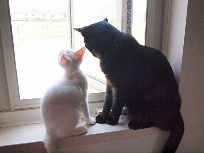 白黒親子の窓辺の会話20101124