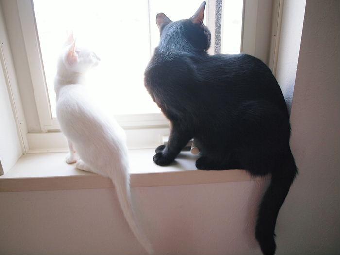 白黒親子の窓辺の会話20101124 (1)