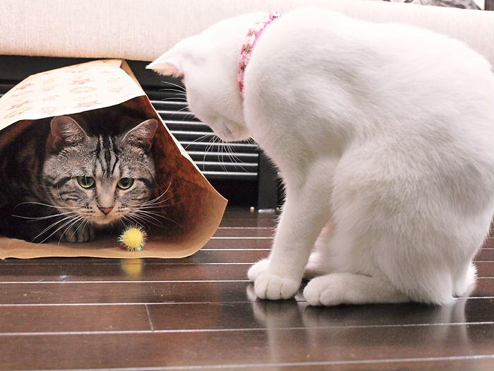 コロコロおじさんとデイジー20101127 (14)