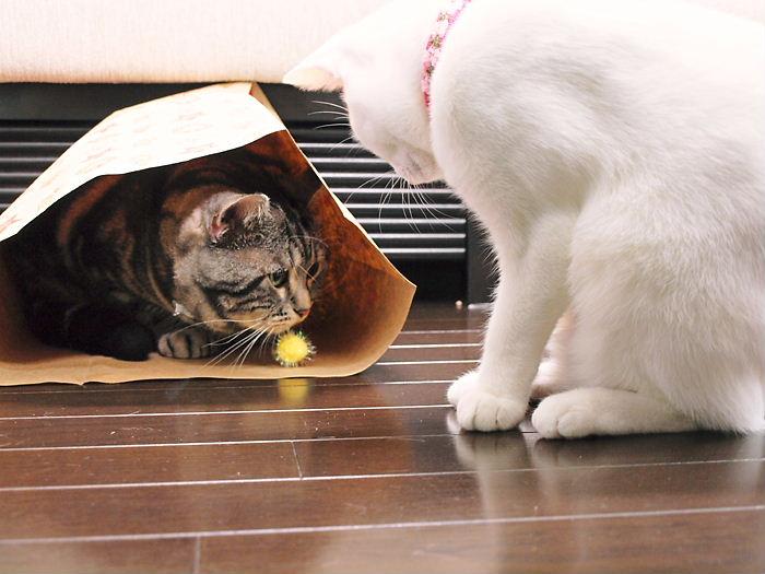 コロコロおじさんとデイジー20101127 (13)
