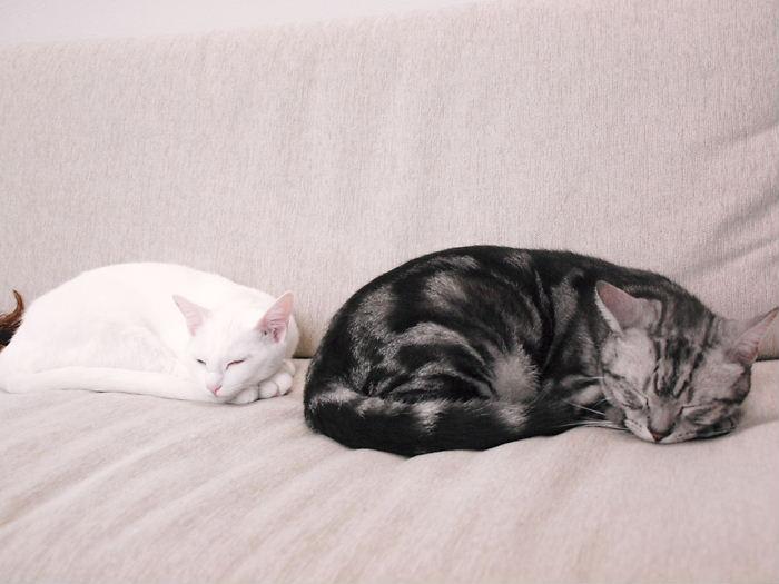 仲良し猫ら20101101 (3)