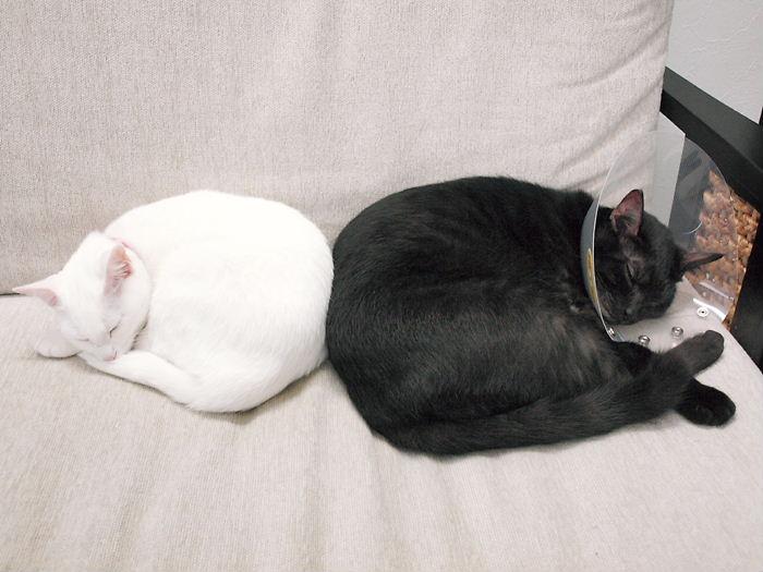 仲良し猫ら20101101