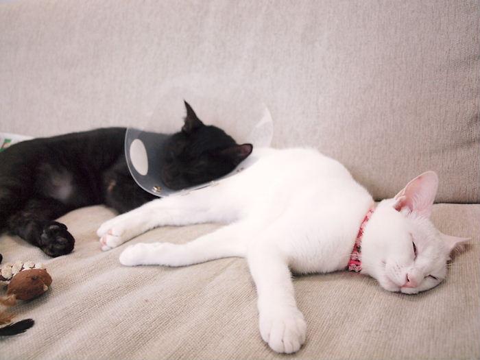 仲良し猫ら20101101 (1)