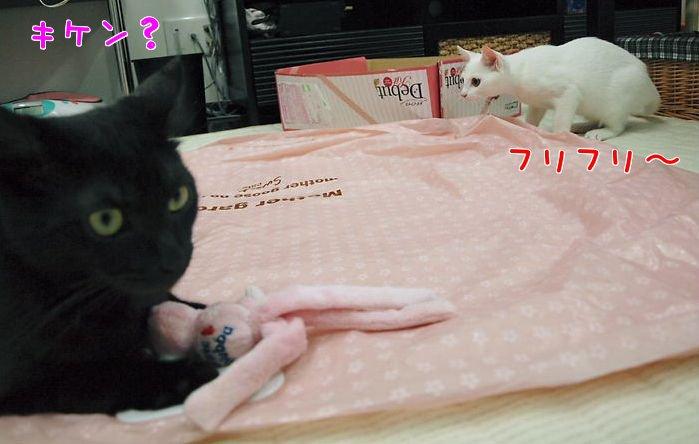 ルイとデイジー20101215