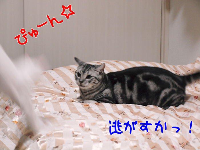 ウェンディvsデイジー姫20101220 (1)