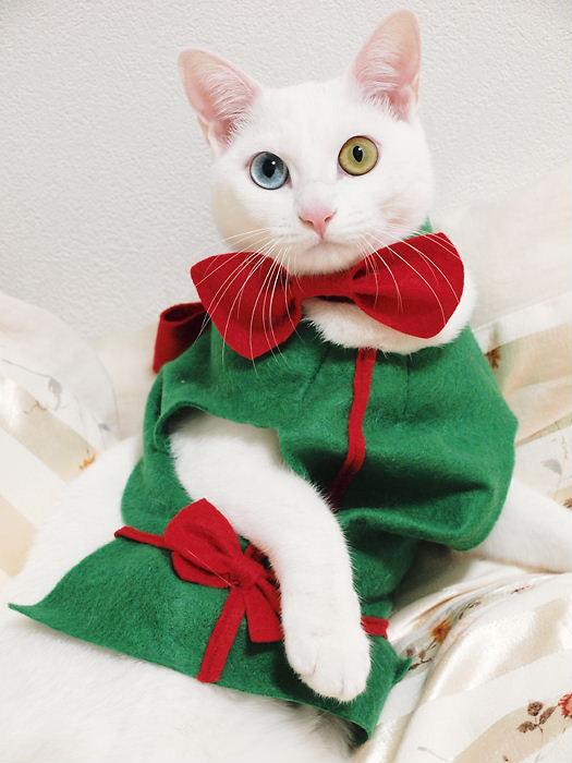 クリスマスコスプレ20101225 (10)