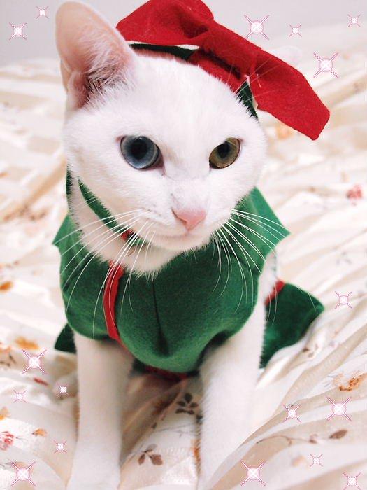 デイジークリスマス20101225