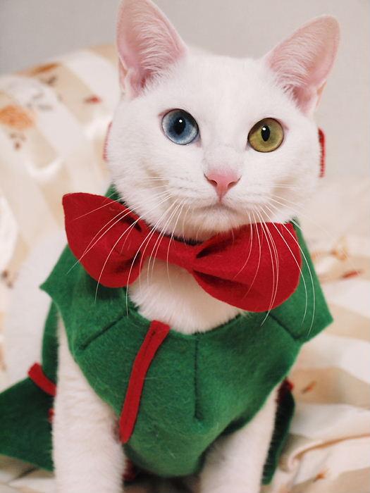 クリスマスコスプレ20101225 (11)