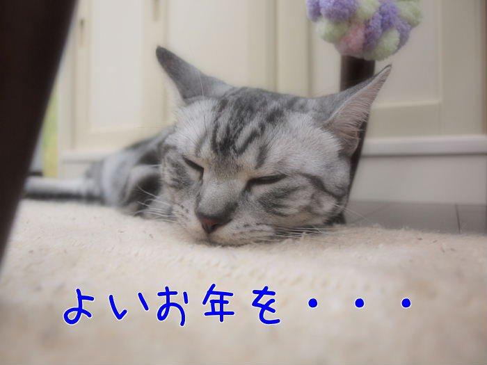 よいお年を・・にゃろめっ☆20101231 (2)