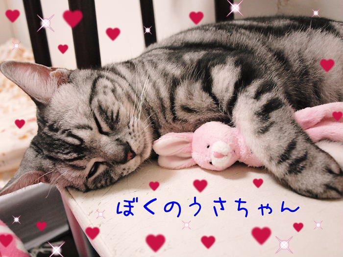 おおみそかにゃろめっ☆20101231 (1)