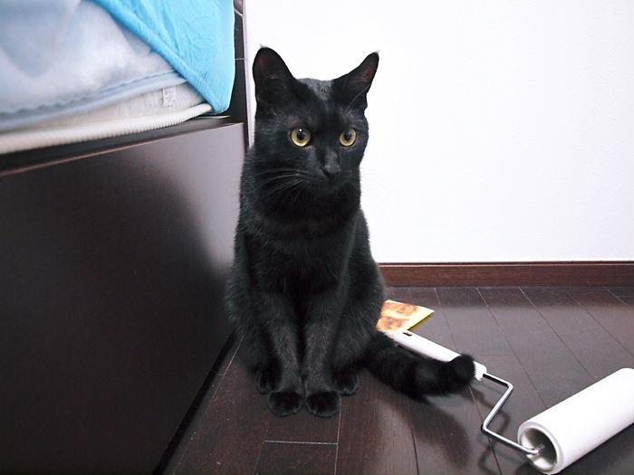 matirui20110131 (1)
