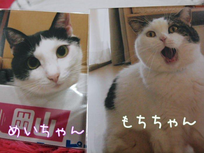 motichannmeichann20110207.jpg