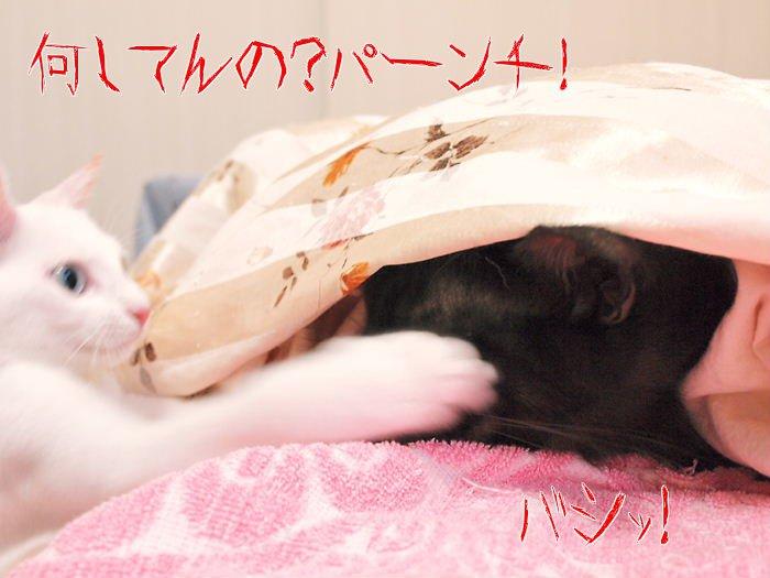 ruidaysie20110119.jpg