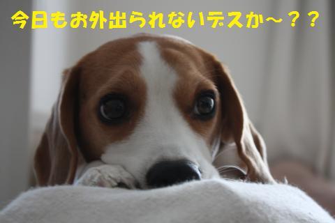 09_convert_20101206210140.jpg