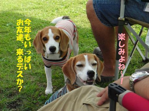 20100919_002_convert_20101201143126.jpg