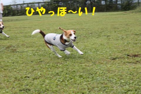IMG_1635_convert_20101218144640.jpg