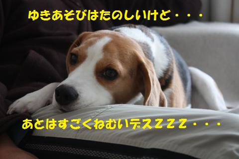 IMG_2531_convert_20110101230637.jpg
