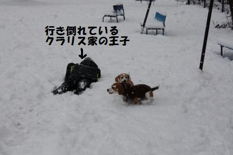 IMG_2670_convert_20110110210616.jpg
