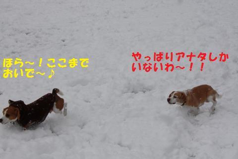 IMG_2671_convert_20110110210705.jpg