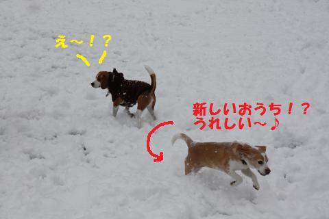 IMG_2691_convert_20110110212122.jpg