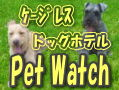 pet watch