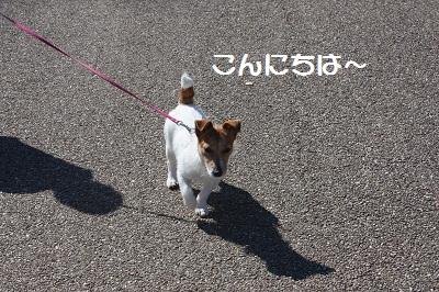 コンぽこ7
