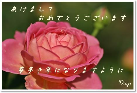 IMG_2303a.jpg