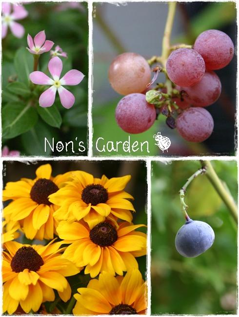 nons garden